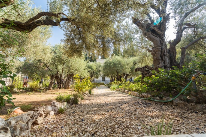 The Mount of Olives and Garden of Gethsemene Offer a Tranquil Scenic Vista of the Old City